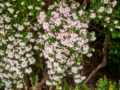 FloralClock_2016_06_10_13-53-04_E-M1_Olympus M ZUIKO DIGITAL ED 60mm 1-2 8 Macro__6105874_©2016_StudioXEPHON