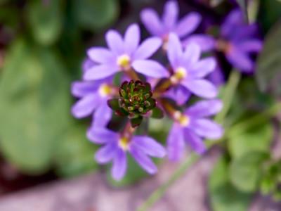 FloralClock_2016_06_10_13-48-15_E-M1_Olympus M ZUIKO DIGITAL ED 60mm 1-2 8 Macro__6105857_©2016_StudioXEPHON