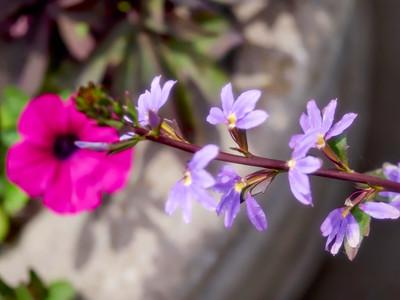 FloralClock_2016_06_10_13-50-43_E-M1_Olympus M ZUIKO DIGITAL ED 60mm 1-2 8 Macro__6105868_©2016_StudioXEPHON