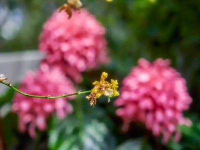 FloralShowhouse_2016_06_09_14-33-14_E-M1_Olympus M ZUIKO DIGITAL ED 60mm 1-2 8 Macro__6094791_©2016_StudioXEPHON