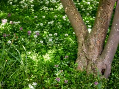 FloralShowhouse_2016_06_09_14-25-20_E-M1_Olympus M ZUIKO DIGITAL ED 60mm 1-2 8 Macro__6094772_©2016_StudioXEPHON