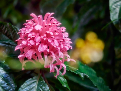 FloralShowhouse_2016_06_09_14-33-27_E-M1_Olympus M ZUIKO DIGITAL ED 60mm 1-2 8 Macro__6094793_©2016_StudioXEPHON