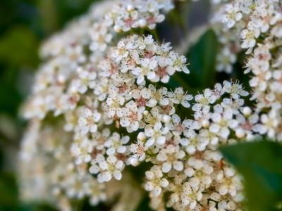 FloralShowhouse_2016_06_09_14-26-45_E-M1_Olympus M ZUIKO DIGITAL ED 60mm 1-2 8 Macro__6094774_©2016_StudioXEPHON