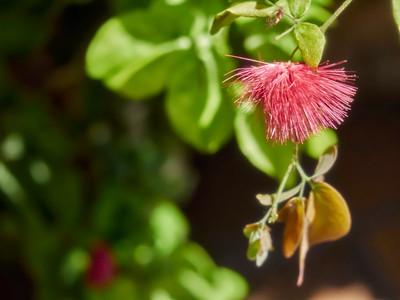 FloralShowhouse_2016_06_09_14-34-05_E-M1_Olympus M ZUIKO DIGITAL ED 60mm 1-2 8 Macro__6094794_©2016_StudioXEPHON