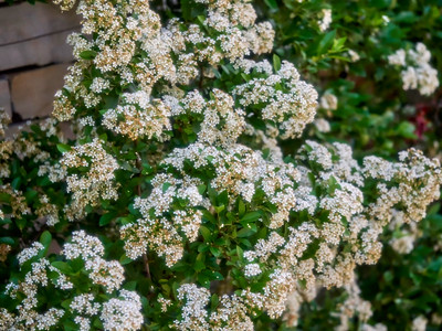 FloralShowhouse_2016_06_09_14-27-45_E-M1_Olympus M ZUIKO DIGITAL ED 60mm 1-2 8 Macro__6094777_©2016_StudioXEPHON