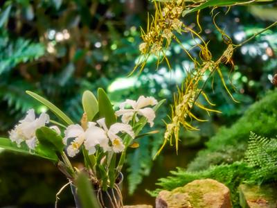 FloralShowhouse_2016_06_09_14-42-21_E-M1_Olympus M ZUIKO DIGITAL ED 60mm 1-2 8 Macro__6094824_©2016_StudioXEPHON