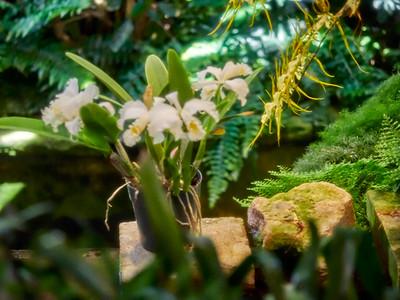 FloralShowhouse_2016_06_09_14-42-27_E-M1_Olympus M ZUIKO DIGITAL ED 60mm 1-2 8 Macro__6094825_©2016_StudioXEPHON