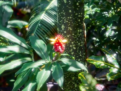 FloralShowhouse_2016_06_09_14-39-20_E-M1_Olympus M ZUIKO DIGITAL ED 60mm 1-2 8 Macro__6094811_©2016_StudioXEPHON