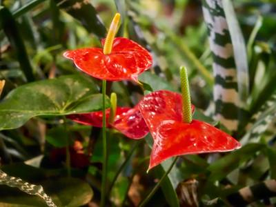 FloralShowhouse_2016_06_09_14-41-14_E-M1_Olympus M ZUIKO DIGITAL ED 60mm 1-2 8 Macro__6094819_©2016_StudioXEPHON