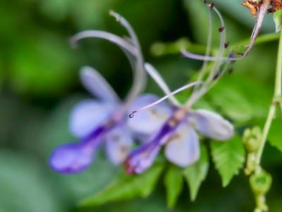 FloralShowhouse_2016_06_09_14-36-20_E-M1_Olympus M ZUIKO DIGITAL ED 60mm 1-2 8 Macro__6094799_©2016_StudioXEPHON