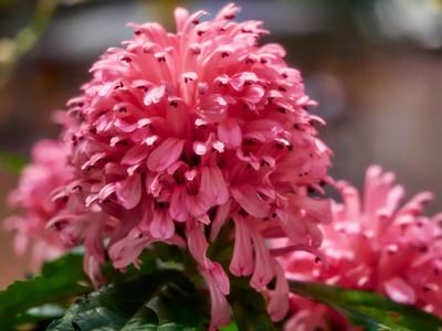 FloralShowhouse_2016_06_09_14-32-51_E-M1_Olympus M ZUIKO DIGITAL ED 60mm 1-2 8 Macro__6094790_©2016_StudioXEPHON
