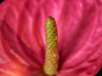 FloralShowhouse_2016_06_09_14-31-47_E-M1_Olympus M ZUIKO DIGITAL ED 60mm 1-2 8 Macro__6094785_©2016_StudioXEPHON