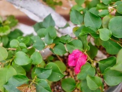 Japanese Friendship Garden_2016_06_30_10-18-26_E-M1            _OLYMPUS M 12-40mm F2 8__6307798_©2016_StudioXEPHON