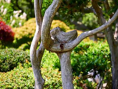JapaneseGardenHayward_2016_05_27_13-56-50_E-M1_Olympus M ZUIKO DIGITAL ED 60mm 1-2 8 Macro__5273115_©2016_StudioXEPHON