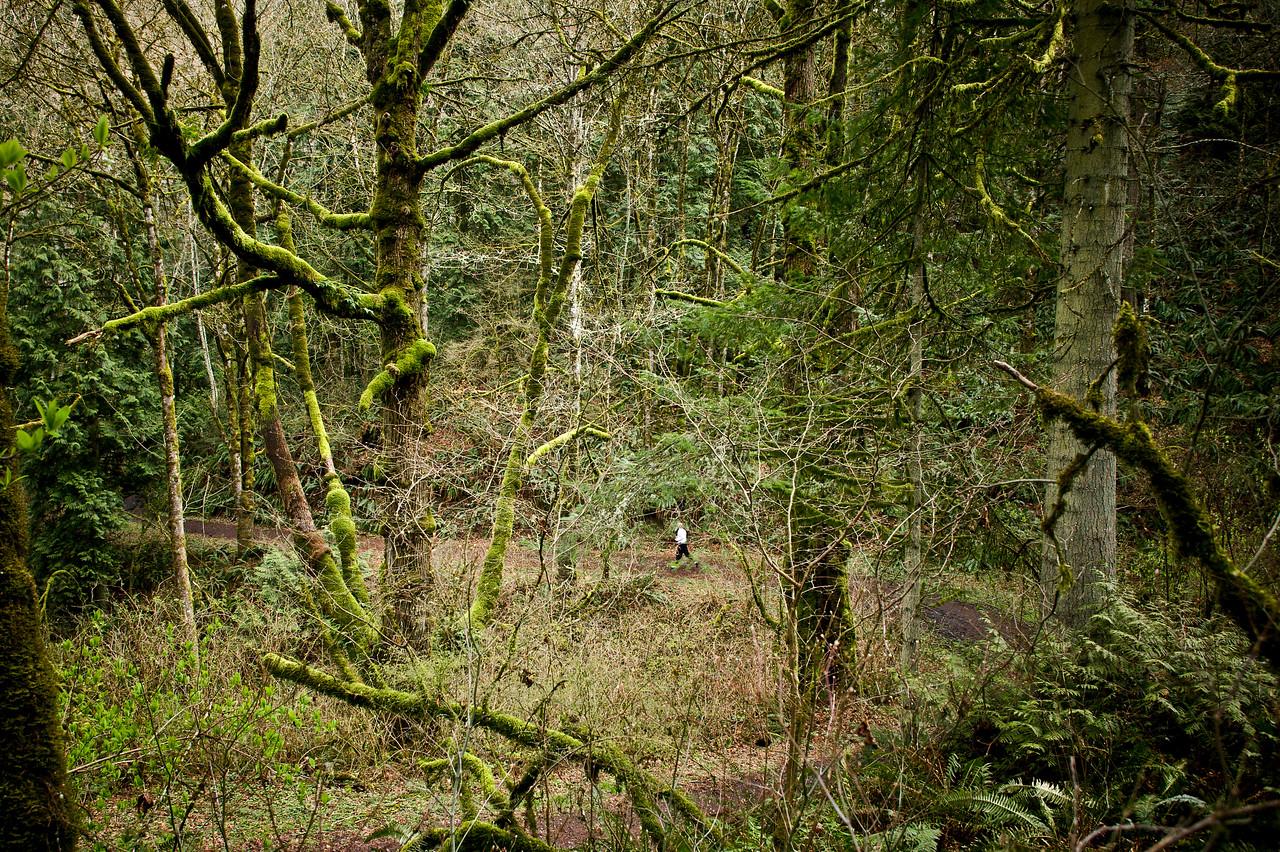 Trail Runner, Forest Park, Portland, Oregon