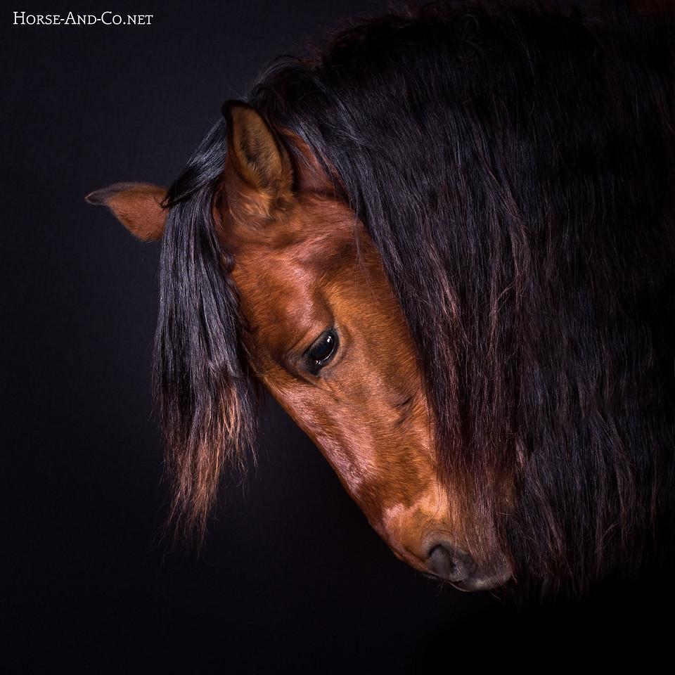 Tabasco dans le studio mobile Horse and Co