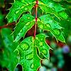SRd1806_5692_Leaves