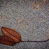 SRf2002_1925_Leaf