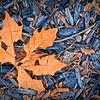 SRf2002_1932_Leaf