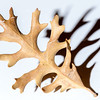 SRb1603_5079_LeafShadow