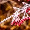 SRb1612_8093_Frost-Edit