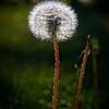 SRf2005_2187_Flower