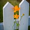 SRf2006_2609_Flower