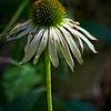 SRf2107_6550_Flower