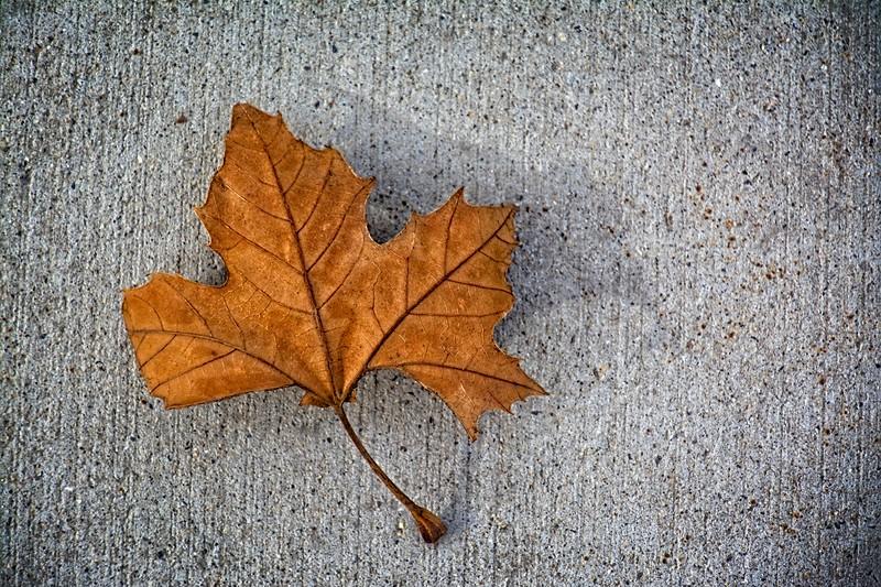SRf2002_1922_Leaf
