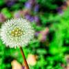 SRc1510_5090_Flora
