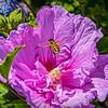 SRV1407_5923_FlowerBees-Edit