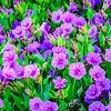 SRV1408_8282_Flora