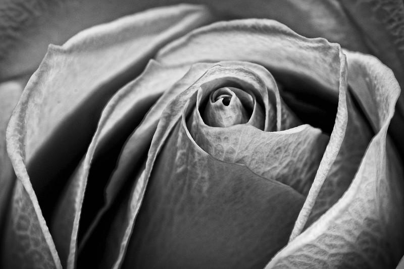 SRW1409_0180_Rose-2