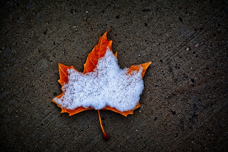 Wet little leaf on the ground in the wintertime