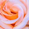 SRV1406_4866_Flowers