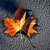 SRd1812_9349_Leaf_at300