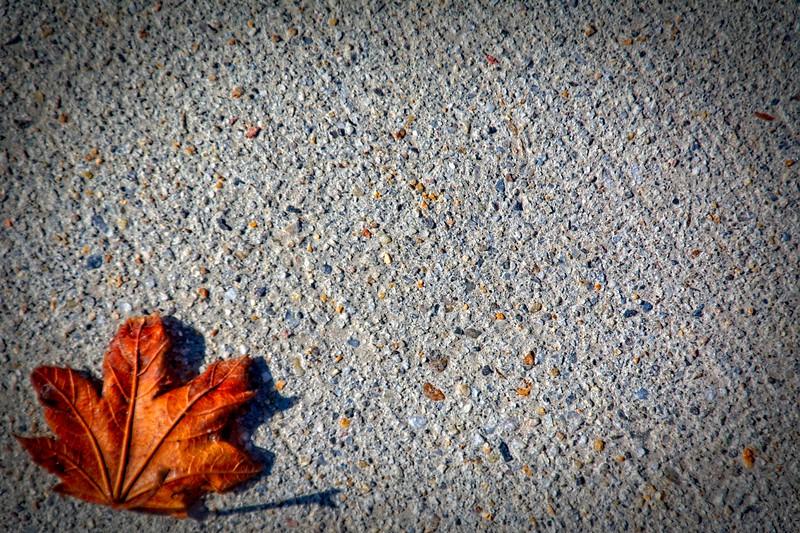 SRf2002_1948_Leaf