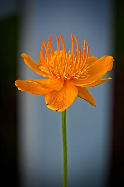 SRf2006_2610_Flower