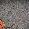 SRf2002_1940_Leaf