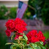 SRf2006_2614_Flower_Flag
