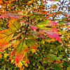 SRc1610_7862_FallLeaves-Edit