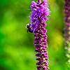SRf2107_6284_FlowerBug