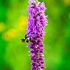 SRf2107_6256_FlowerBug