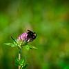 SRf2107_5451_Flower