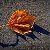 SRd1901_9390_Leaf_at300