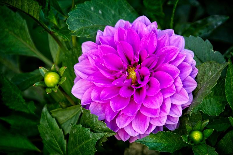 SRf1908_0844_Flower