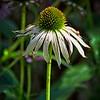 SRf2107_6551_Flower