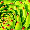 SRV1407_5293_Flower