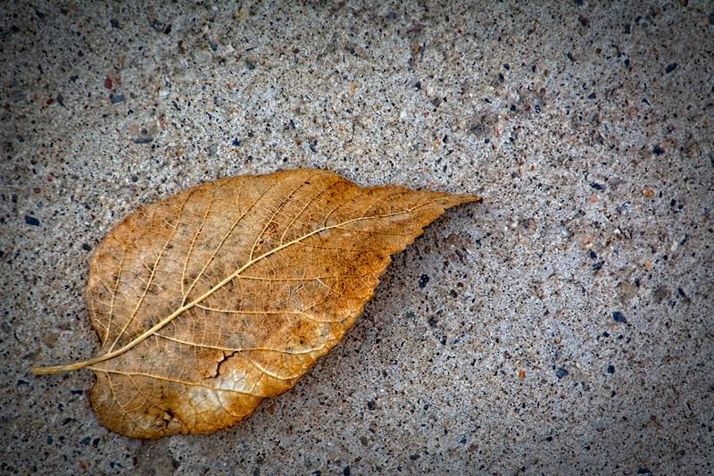 SRf2002_1944_Leaf