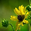 SRf2107_6280_FlowerBug